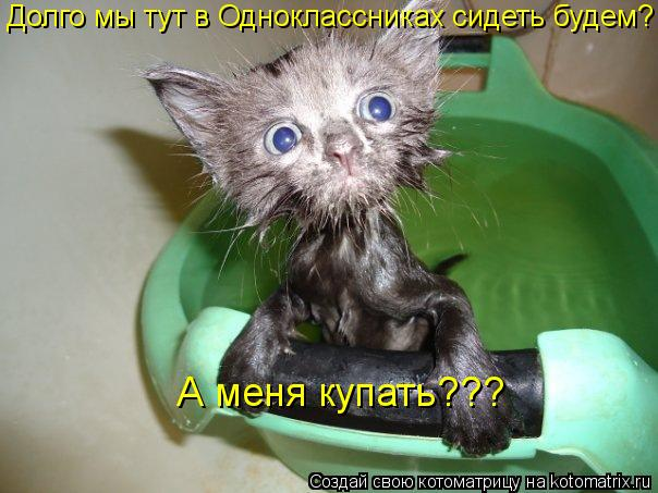 Котоматрица: Долго мы тут в Одноклассниках сидеть будем? А меня купать???
