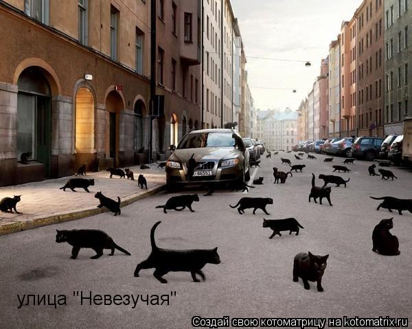 "Котоматрица: улица ""Невезучая"""