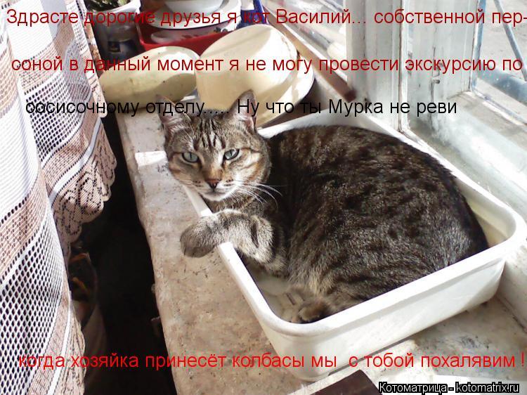 Котоматрица: Здрасте дорогие друзья я кот Василий... собственной пер- соной в данный момент я не могу провести экскурсию по  сосисочному отделу..... Ну что