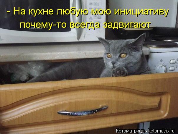 Котоматрица: почему-то всегда задвигают - На кухне любую мою инициативу