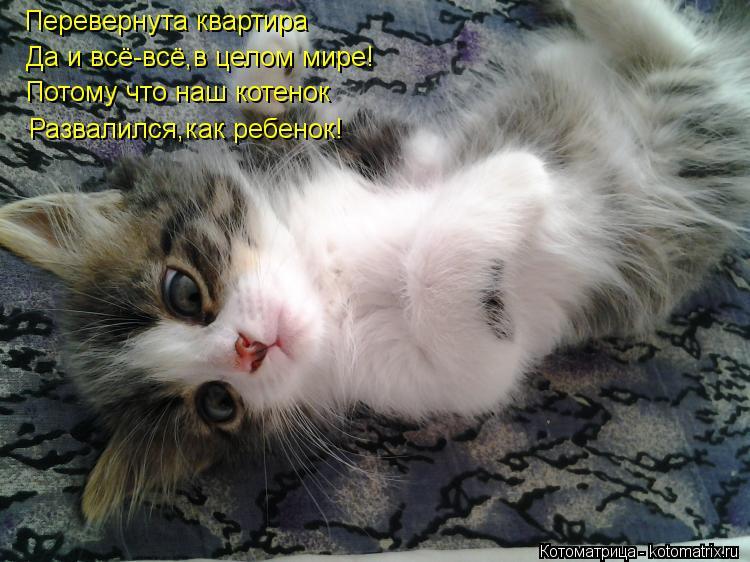 Котоматрица: Перевернута квартира Да и всё-всё,в целом мире! Потому что наш котенок Развалился,как ребенок!