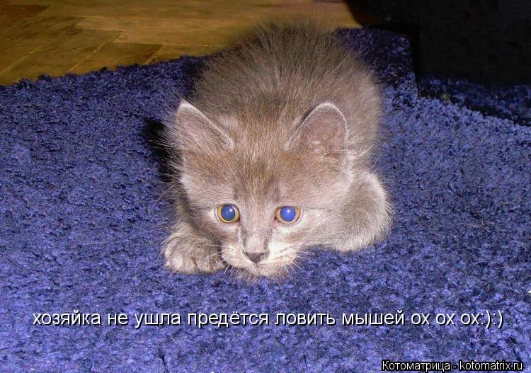 Котоматрица: хозяйка не ушла предётся ловить мышей ох ох ох:):)