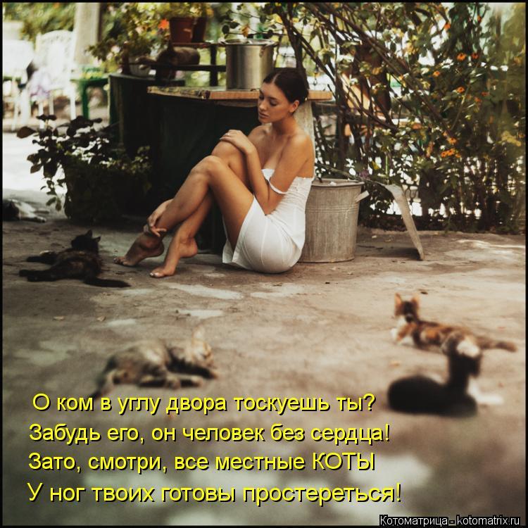 Котоматрица: О ком в углу двора тоскуешь ты? Забудь его, он человек без сердца! Зато, смотри, все местные КОТЫ У ног твоих готовы простереться!