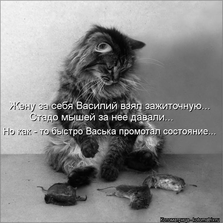 Котоматрица: Жену за себя Василий взял зажиточную... Стадо мышей за нее давали... Но как - то быстро Васька промотал состояние...