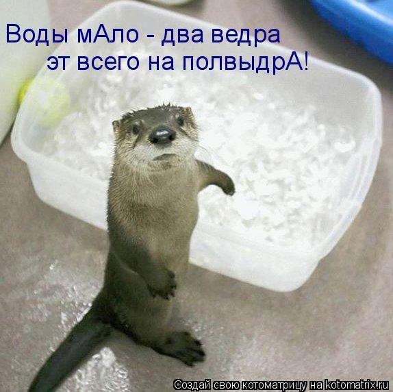 Котоматрица: Воды мАло - два ведра эт всего на полвыдрА!