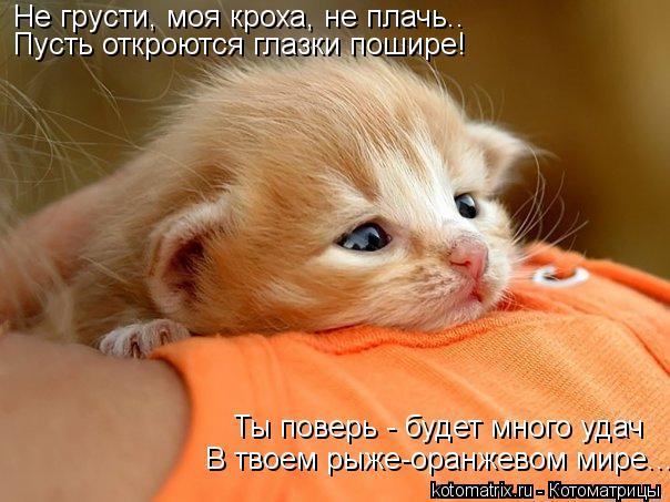 Котоматрица: Не грусти, моя кроха, не плачь.. Пусть откроются глазки пошире! Ты поверь - будет много удач В твоем рыже-оранжевом мире...