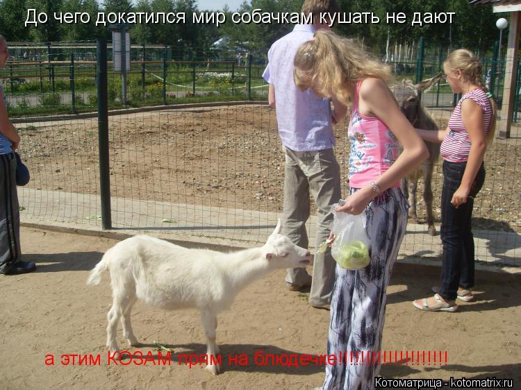 Котоматрица: До чего докатился мир собачкам кушать не дают а этим КОЗАМ прям на блюдечке!!!!!!!!!!!!!!!!!!!!