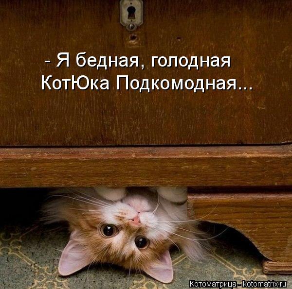 Котоматрица: - Я бедная, голодная КотЮка Подкомодная...