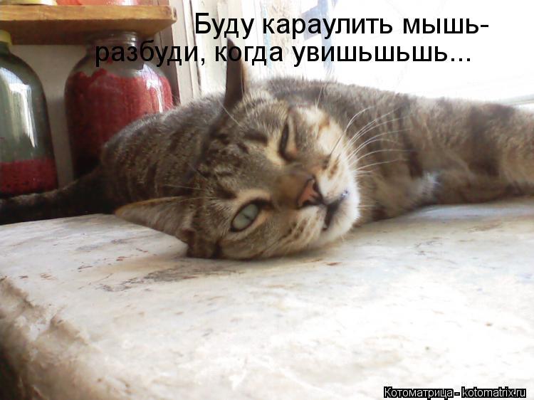 Котоматрица: Буду караулить мышь- разбуди, когда увишьшьшь...