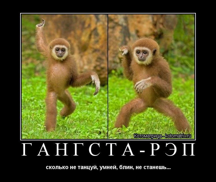 Котоматрица: ГАНГСТА-РЭП сколько не танцуй, умней, блин, не станешь...