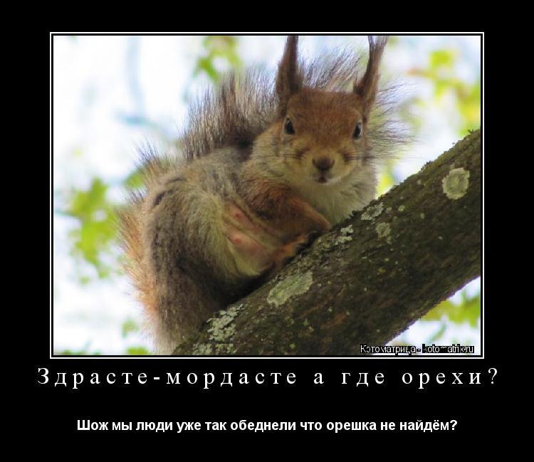 Котоматрица: Здрасте-мордасте а где орехи? Шож мы люди уже так обеднели что орешка не найдём?