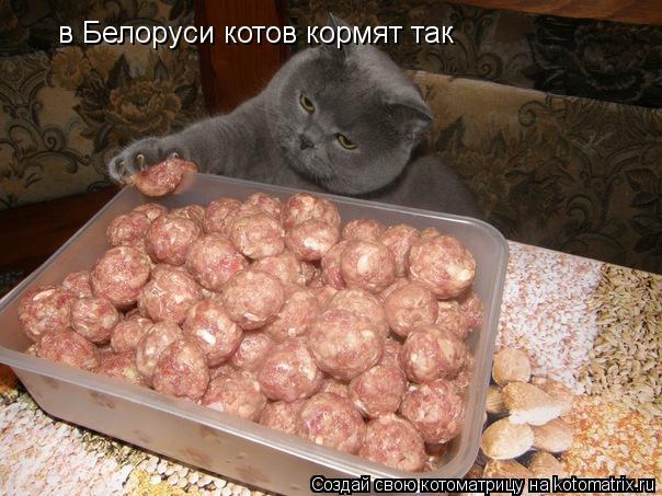 Котоматрица: в Белоруси котов кормят так