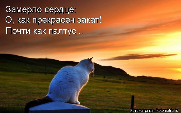 Котоматрица: Замерло сердце: О, как прекрасен закат! Почти как палтус...