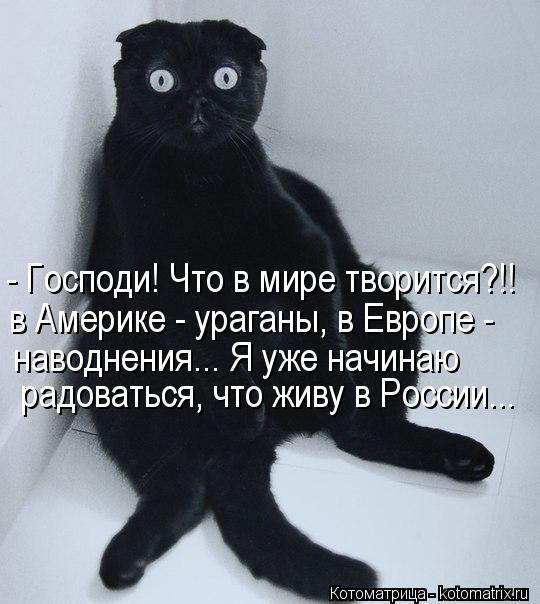 Котоматрица: - Господи! Что в мире творится?!! в Америке - ураганы, в Европе - наводнения... Я уже начинаю радоваться, что живу в России...