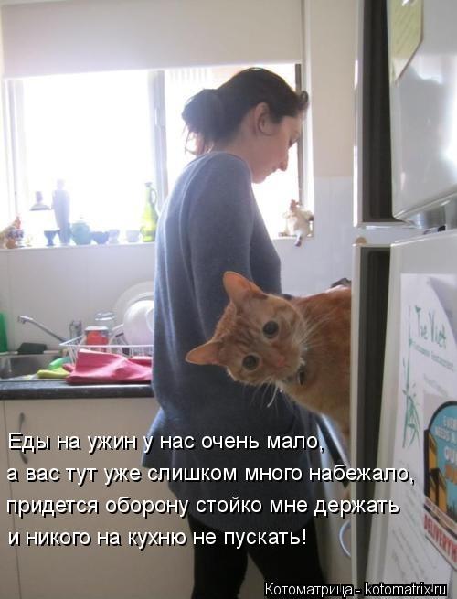 Котоматрица: Еды на ужин у нас очень мало, а вас тут уже слишком много набежало, придется оборону стойко мне держать и никого на кухню не пускать!