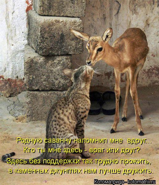 Котоматрица: Родную саванну напомнил мне  вдруг... Кто ты мне здесь - враг или друг? в каменных джунглях нам лучше дружить. Здесь без поддержки так трудно п