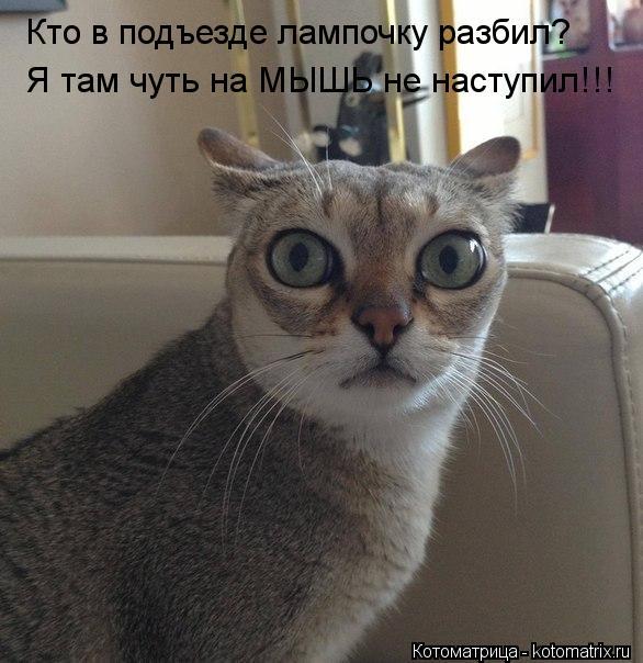 Котоматрица: Кто в подъезде лампочку разбил? Я там чуть на МЫШЬ не наступил!!!