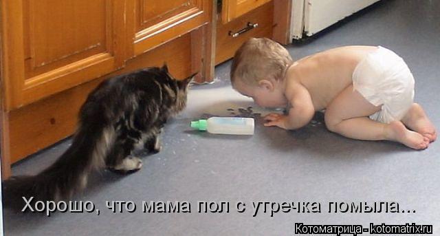 Котоматрица: Хорошо, что мама пол с утречка помыла...