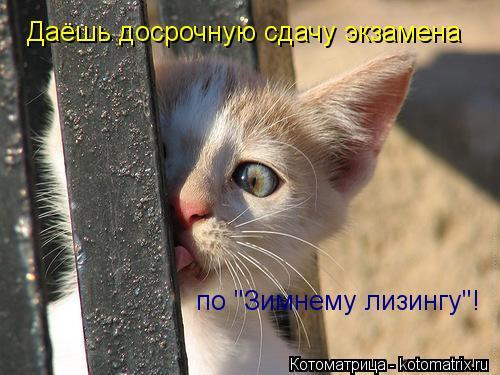 """Котоматрица: Даёшь досрочную сдачу экзамена  по """"Зимнему лизингу""""!"""