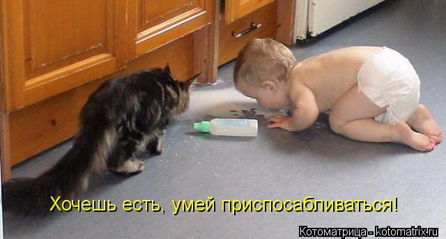 Котоматрица: Хочешь есть, умей приспосабливаться!
