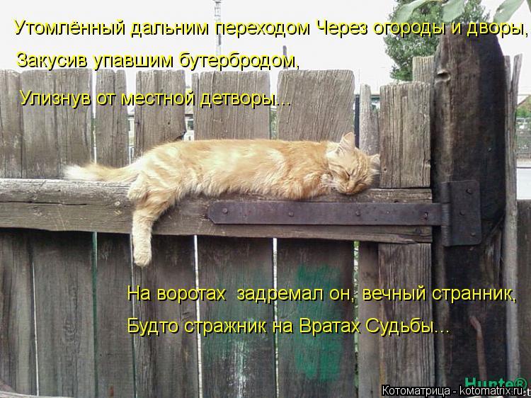 Котоматрица: Утомлённый дальним переходом Через огороды и дворы, Закусив упавшим бутербродом, Улизнув от местной детворы... На воротах  задремал он, вечн