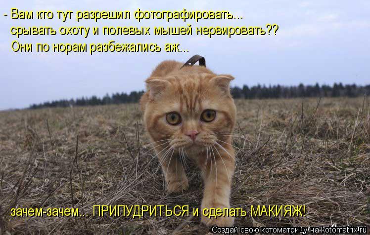 Котоматрица: - Вам кто тут разрешил фотографировать... срывать охоту и полевых мышей нервировать?? Они по норам разбежались аж... зачем-зачем... ПРИПУДРИТЬС