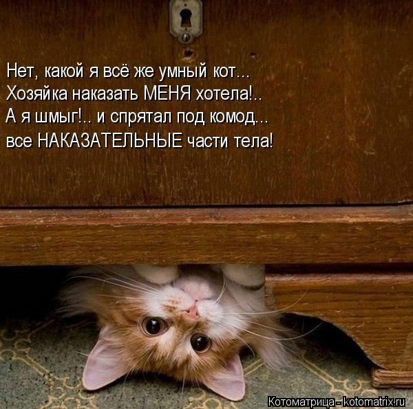 Котоматрица: Нет, какой я всё же умный кот... Хозяйка наказать МЕНЯ хотела!.. А я шмыг!.. и спрятал под комод... все НАКАЗАТЕЛЬНЫЕ части тела!
