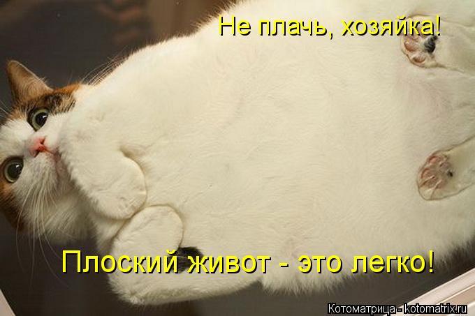 Котоматрица: Не плачь, хозяйка! Плоский живот - это легко!