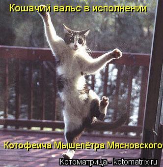 Котоматрица: Кошачий вальс в исполнении Котофеича Мышепётра Мясновского