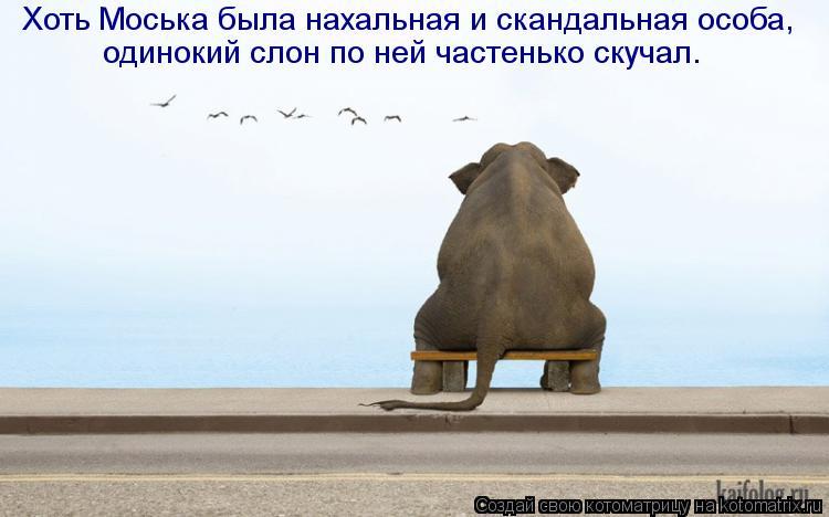 Котоматрица: Хоть Моська была нахальная и скандальная особа,  одинокий слон по ней частенько скучал.