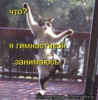 Котоматрица: что? я гимнастикой  занимаюсь