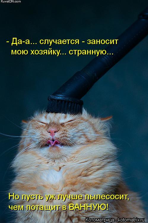 Котоматрица: - Да-а... случается - заносит мою хозяйку... странную... Но пусть уж лучше пылесосит, чем потащит в ВАННУЮ!