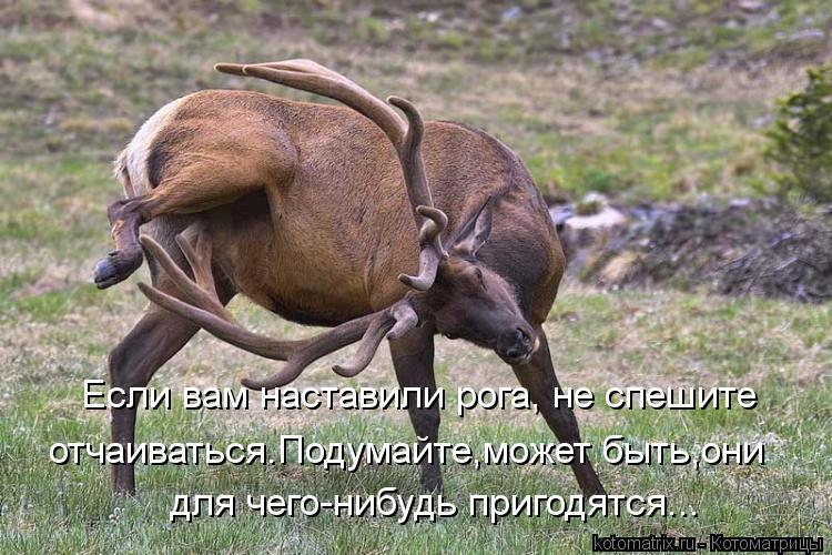 Котоматрица: Если вам наставили рога, не спешите отчаиваться.Подумайте,может быть,они для чего-нибудь пригодятся...