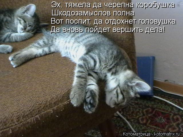 Котоматрица: Эх, тяжела да черепна коробушка Шкодозамыслов полна Вот поспит, да отдохнет головушка Да вновь пойдет вершить дела!