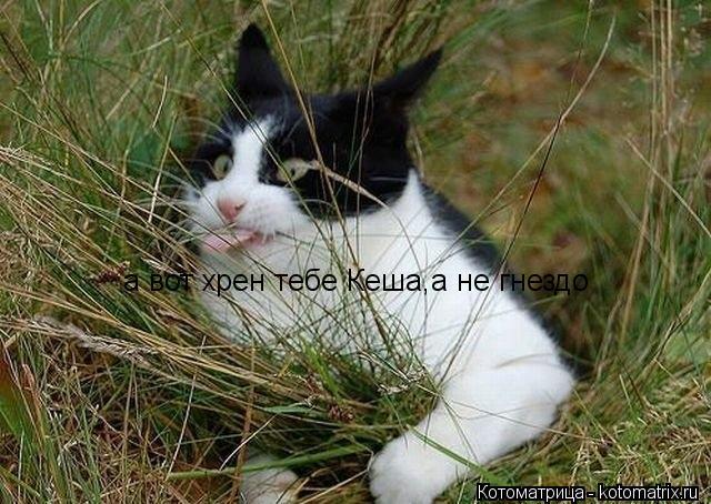 Котоматрица: а вот хрен тебе Кеша,а не гнездо