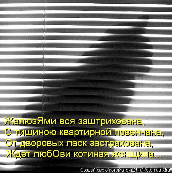 Котоматрица: ЖалюзЯми вся заштрихована, С тишиною квартирной повенчана, От дворовых ласк застрахована, Ждет любОви котиная женщина...