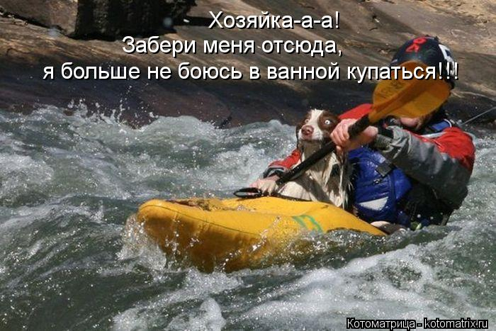 Котоматрица: Хозяйка-а-а! Забери меня отсюда,  я больше не боюсь в ванной купаться!!!