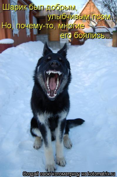 Котоматрица: Шарик был добрым, улыбчивым псом. Но, почему-то, многие  его боялись...