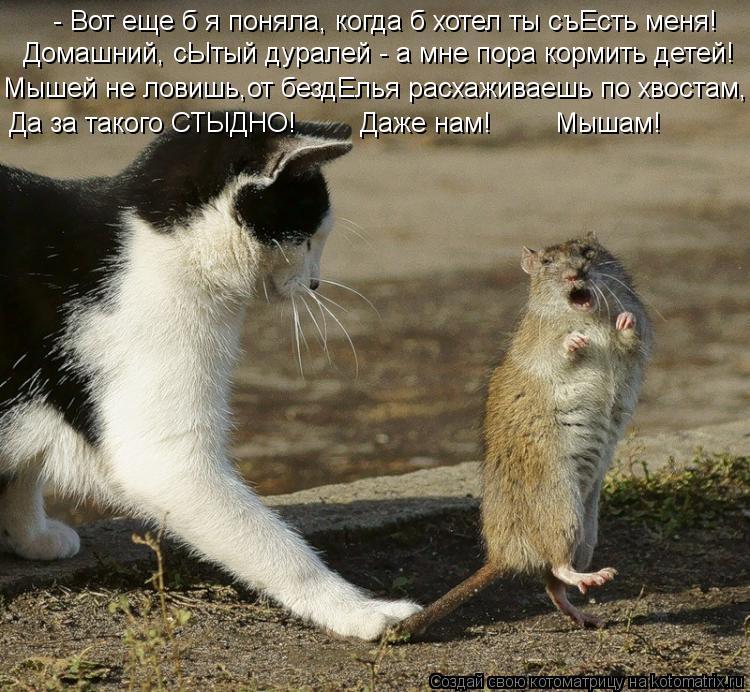 Котоматрица: - Вот еще б я поняла, когда б хотел ты съЕсть меня! Мышей не ловишь,от бездЕлья расхаживаешь по хвостам, Домашний, сЫтый дуралей - а мне пора ко