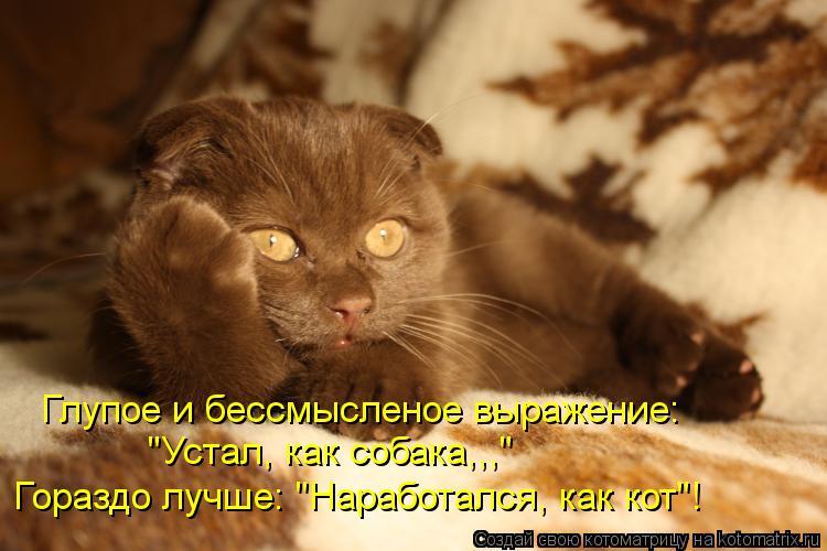 """Котоматрица: Глупое и бессмысленое выражение: """"Устал, как собака,,,"""" Гораздо лучше: """"Наработался, как кот""""!"""