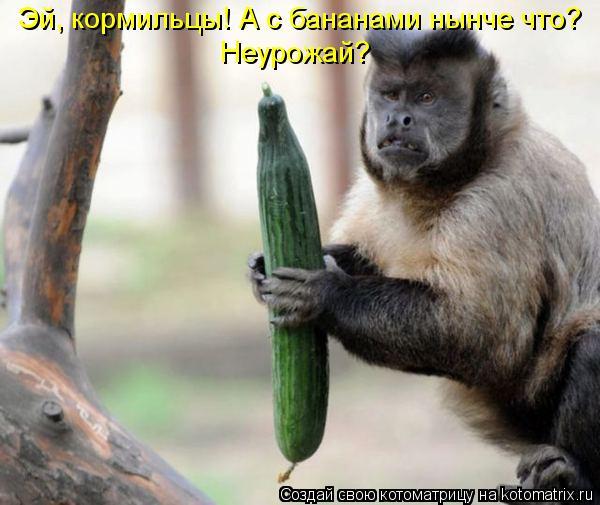 Котоматрица: Эй, кормильцы! А с бананами нынче что?  Неурожай?