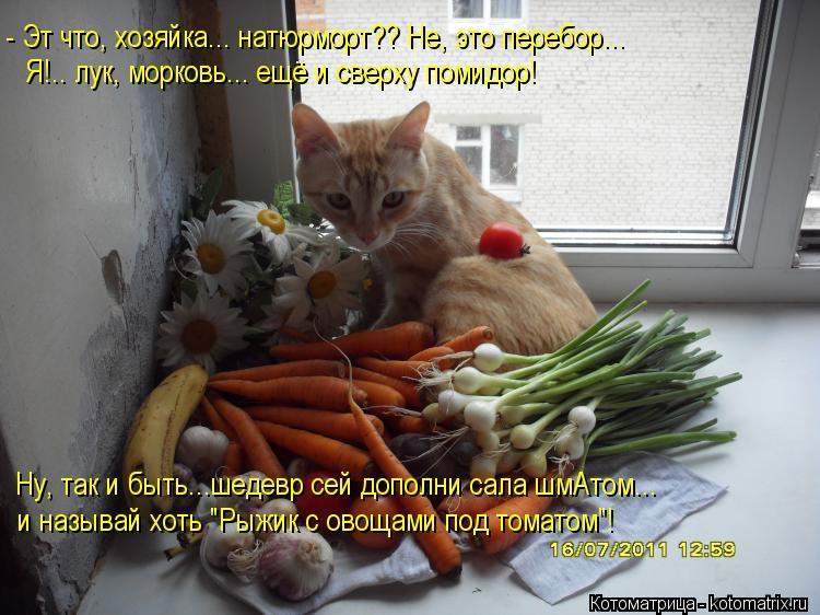 Котоматрица: - Эт что, хозяйка... натюрморт?? Не, это перебор... Я!.. лук, морковь... ещё и сверху помидор! Ну, так и быть...шедевр сей дополни сала шмАтом... и назы