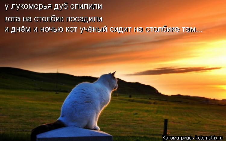 Котоматрица: у лукоморья дуб спилили  кота на столбик посадили   и днём и ночью кот учёный сидит на столбике там…    у лукоморья дуб спилили кота на столби