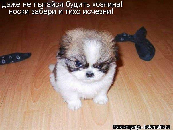 Котоматрица: даже не пытайся будить хозяина! носки забери и тихо исчезни!