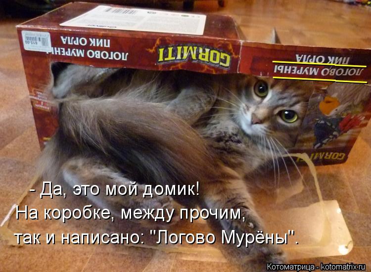 """Котоматрица: - Да, это мой домик! На коробке, между прочим, так и написано: """"Логово Мурёны"""". _________ _________"""