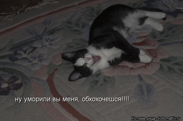 Котоматрица: ну уморили вы меня, обхохочешся!!!!