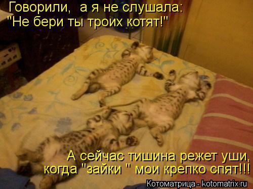 """Котоматрица: Говорили,  а я не слушала: """"Не бери ты троих котят!"""" А сейчас тишина режет уши, когда """"зайки """" мои крепко спят!!!"""