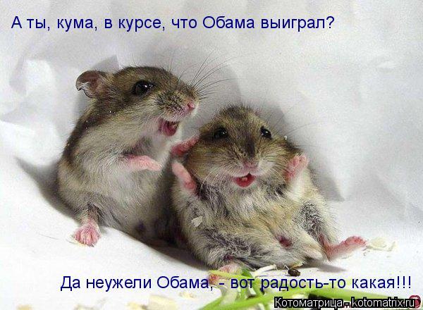 Котоматрица: А ты, кума, в курсе, что Обама выиграл? Да неужели Обама, - вот радость-то какая!!!