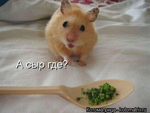 Котоматрица: А сыр где?