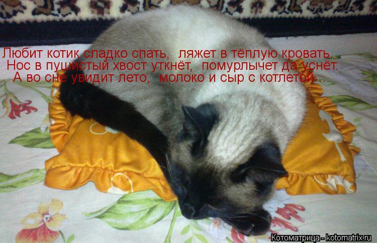 Котоматрица: Любит котик сладко спать,  ляжет в тёплую кровать,  Нос в пушистый хвост уткнёт,  помурлычет да уснёт. А во сне увидит лето,  молоко и сыр с кот